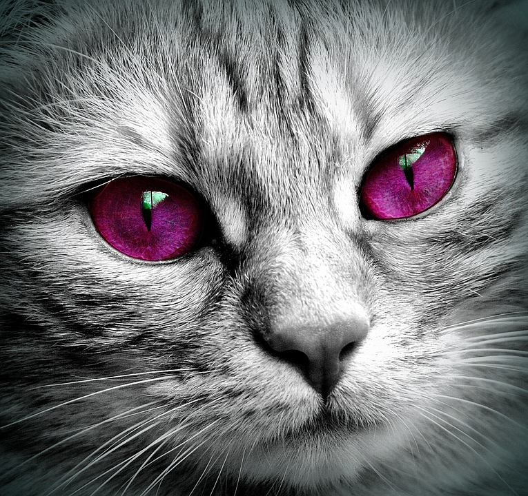 Veľká mačička zblízka obrázky