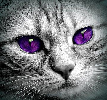 Mačička pekný zadok