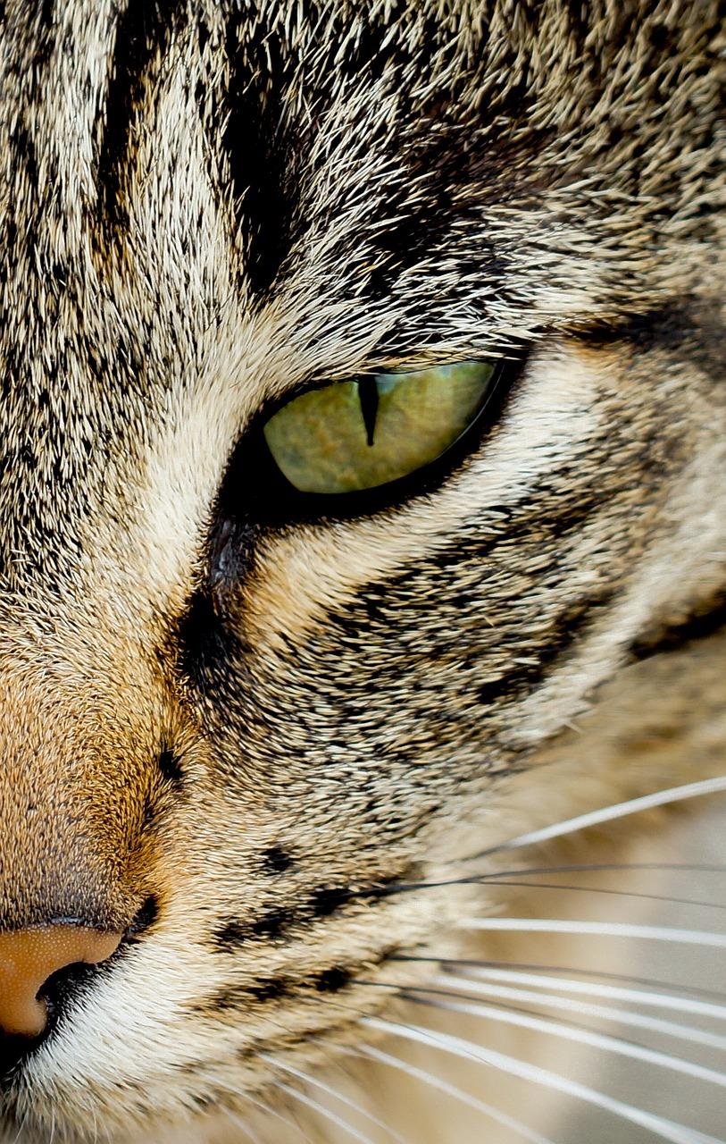 море картинки кошачьего взгляда могут прийти