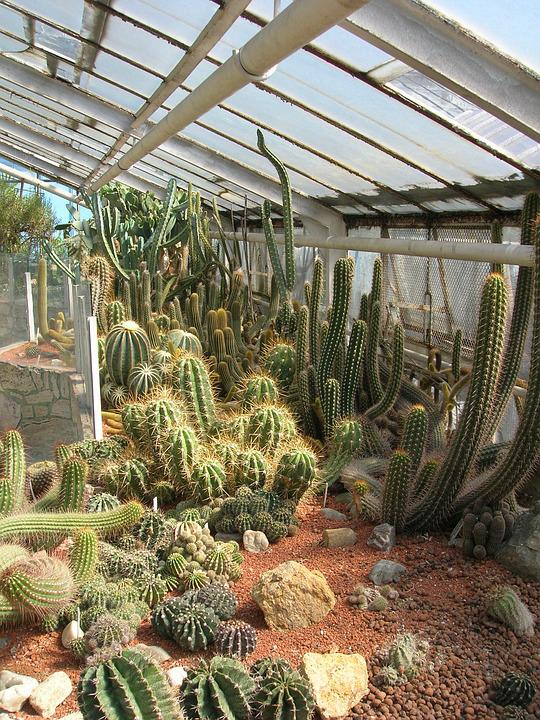 Gewachshaus Kakteen Kaktus Kostenloses Foto Auf Pixabay