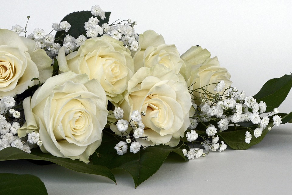 roses flowers gypsophila flower - photo #4