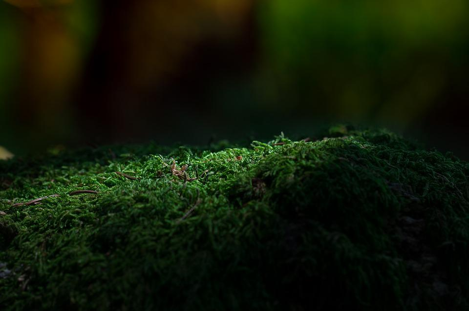 free photo  moss  forest  green  forest floor