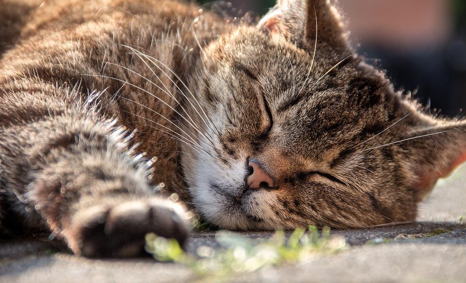 cat-1421136_960_720.jpg