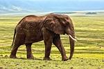 słoń, safari, zwierząt