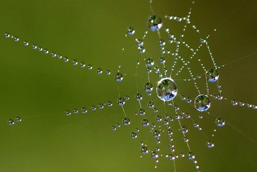 Perlé, Toile D'Araignée, Web, Rosée