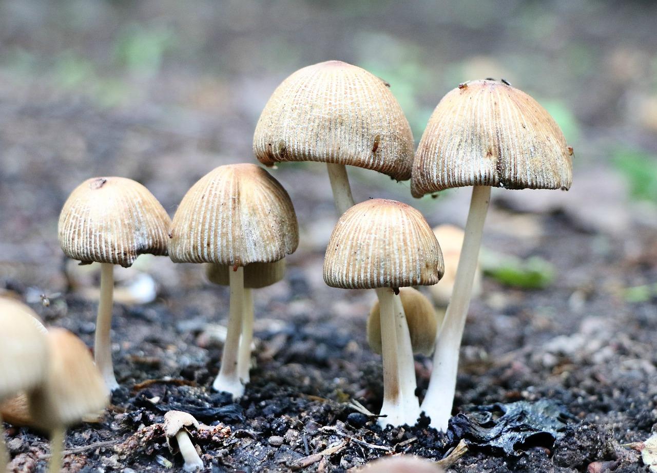 грибы поганки фото с названиями затронем тему растений