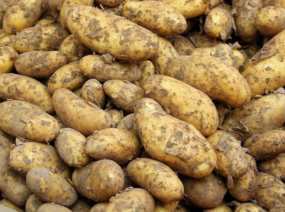 Ziemniak, Sasza, Żywność, Młodych Ziemniaków, Zdrowy