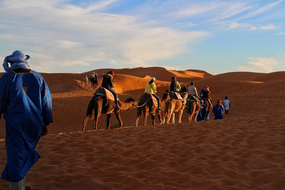 Viaje, Aventura, Caravana De Camellos, Sahara