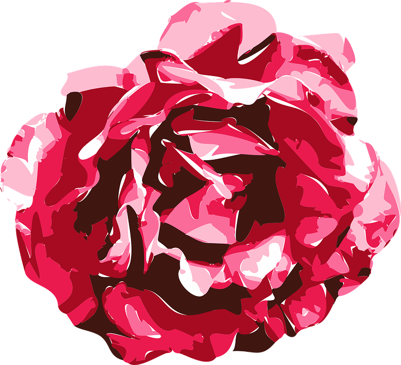 Rose Vector Graphics Free Vector Graphic On Pixabay