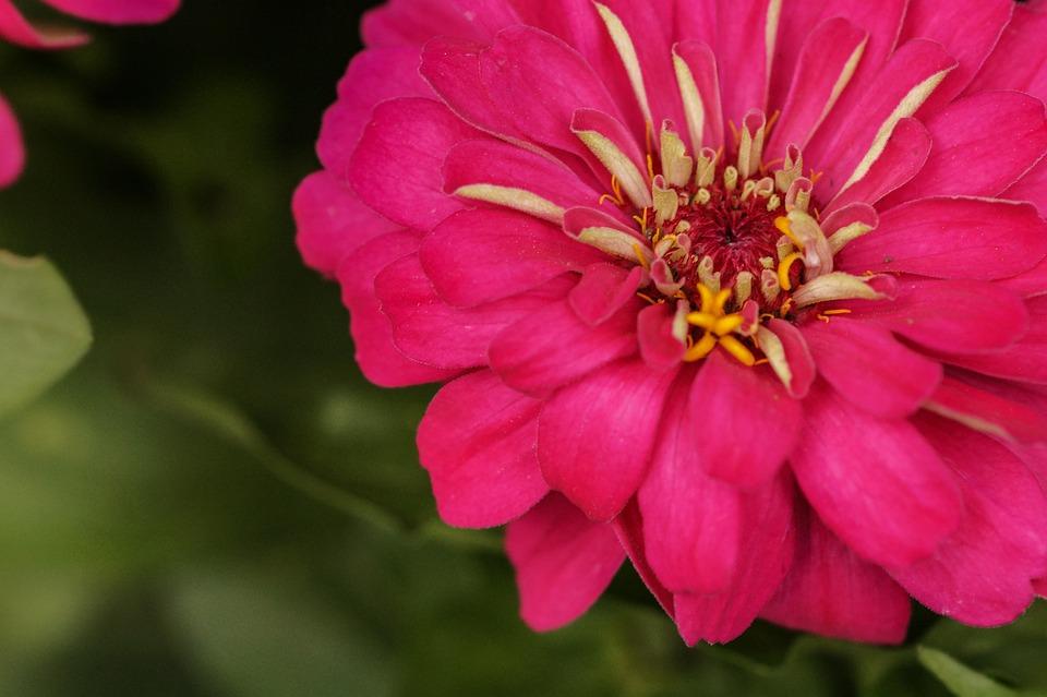 Rosa Rose Mexicaine Fleur Photo Gratuite Sur Pixabay