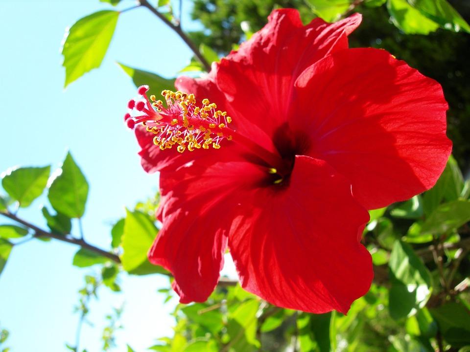 Fleur Rouge Belle Photo Gratuite Sur Pixabay