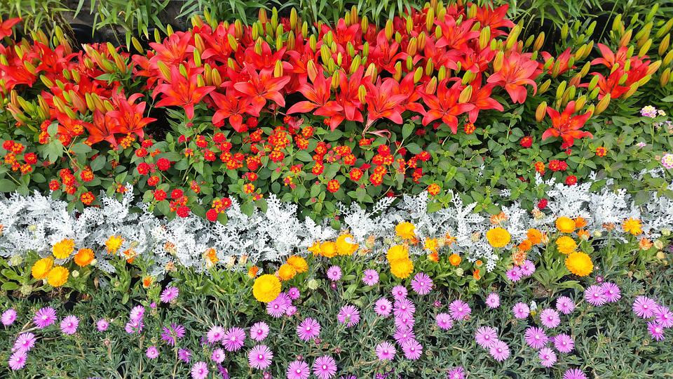 Jardin Fleuri Ulsan - Photo gratuite sur Pixabay
