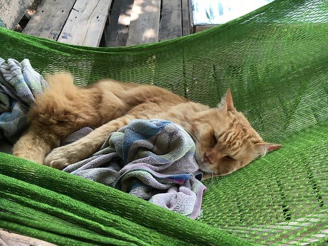 Free Photo Cat Cat In Hammock Sleeping Cat Free Image