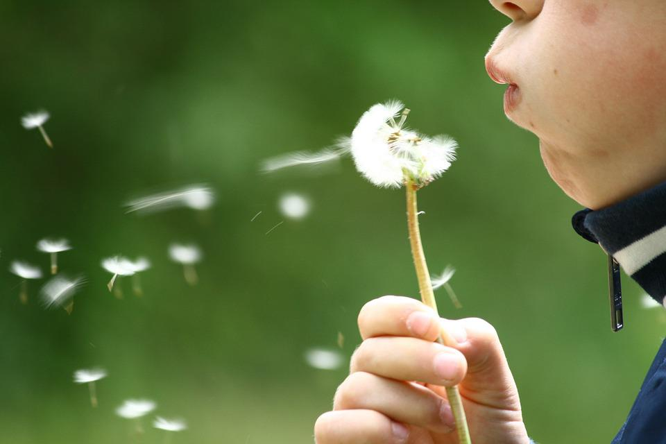 free photo  dandelion  blowing  childhood  kid