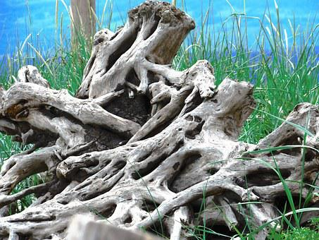 Driftwood, Coast, Beach, Landscape, Tree