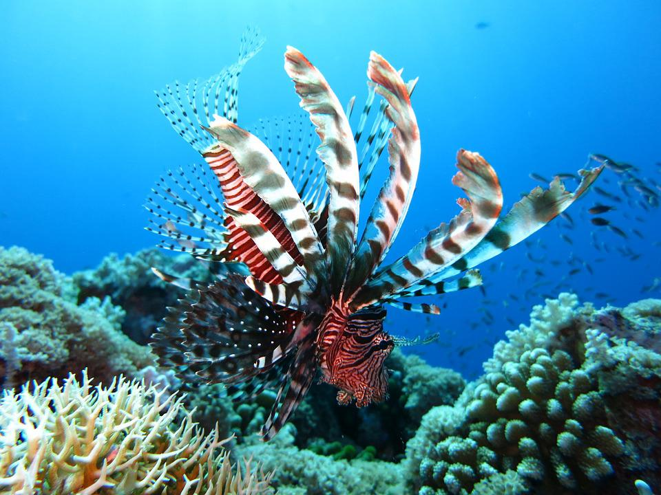 Marine life in Layang-Layang Island