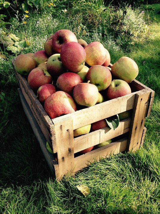 Pomme déclassée Gala/ Elstar