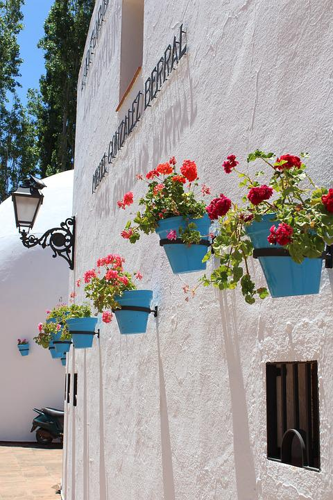flowers blue white pots spain spanish natural & Flowers Blue White - Free photo on Pixabay