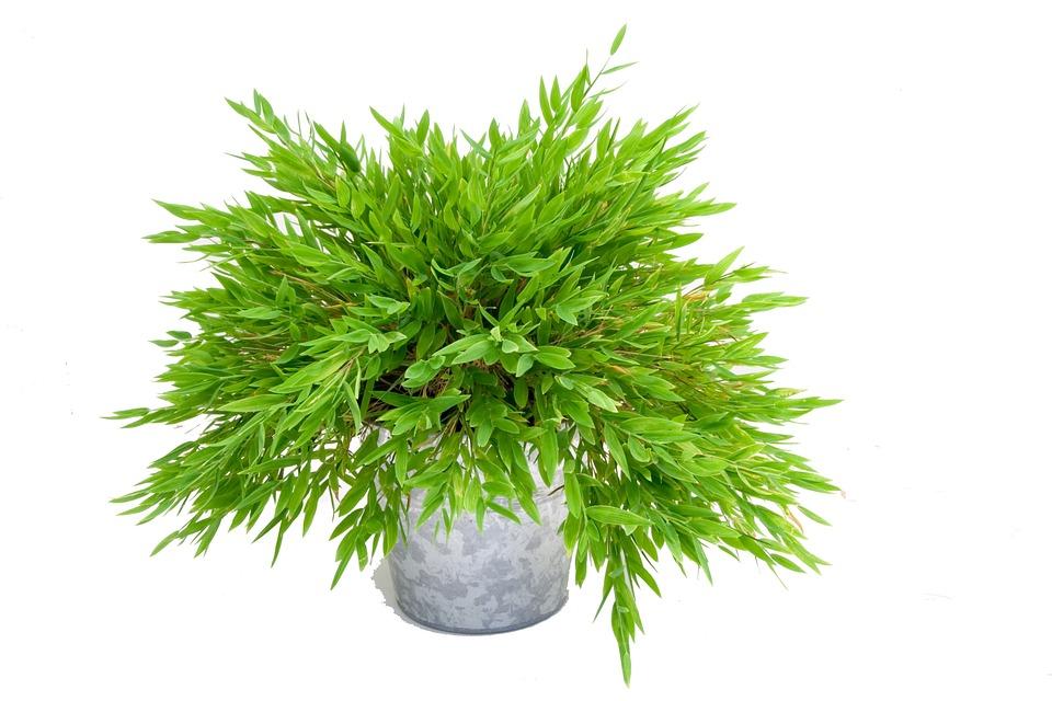 Photo gratuite plante verte bambou nature image for Plante 7 feuilles