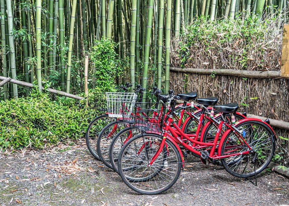 Japan Bambuswald Arashiyama Kostenloses Foto Auf Pixabay