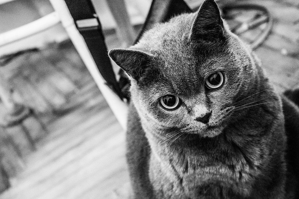 Gambar Workshop Girl Nak Hilangkan Stress Jom Layan Kucing