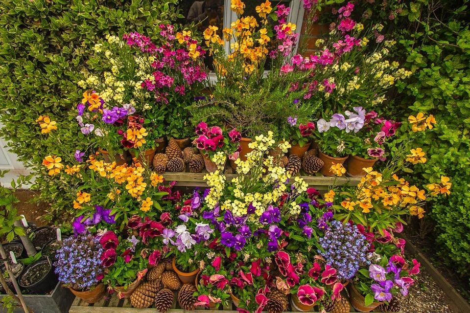 Top Primavera Jardim Flores · Foto gratuita no Pixabay FN02