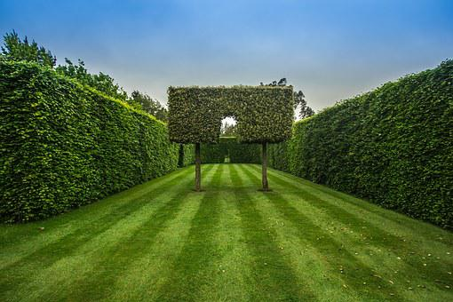Exceptional Garden, Hedge, Green