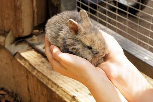 Rabbit, Hare, Pet, Cute, Animal, Sweet