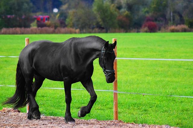 free photo horse  animal  nature  wildlife free image lion vector image lion vector art