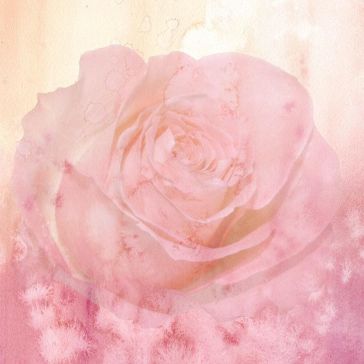 Sfondo Fiore Rosa Immagini Gratis Su Pixabay
