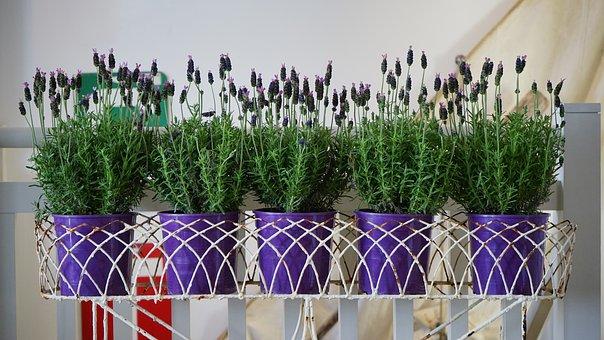 Plant, Pot, Green, Flower, Gardening