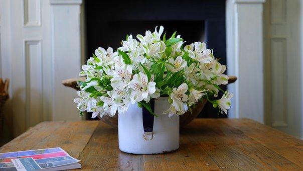 Plant, Pot, Flower, Potted, Flowerpot