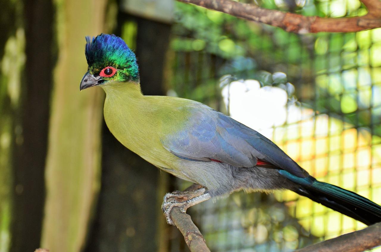 предназначена для экзотические птицы фото с названиями можете