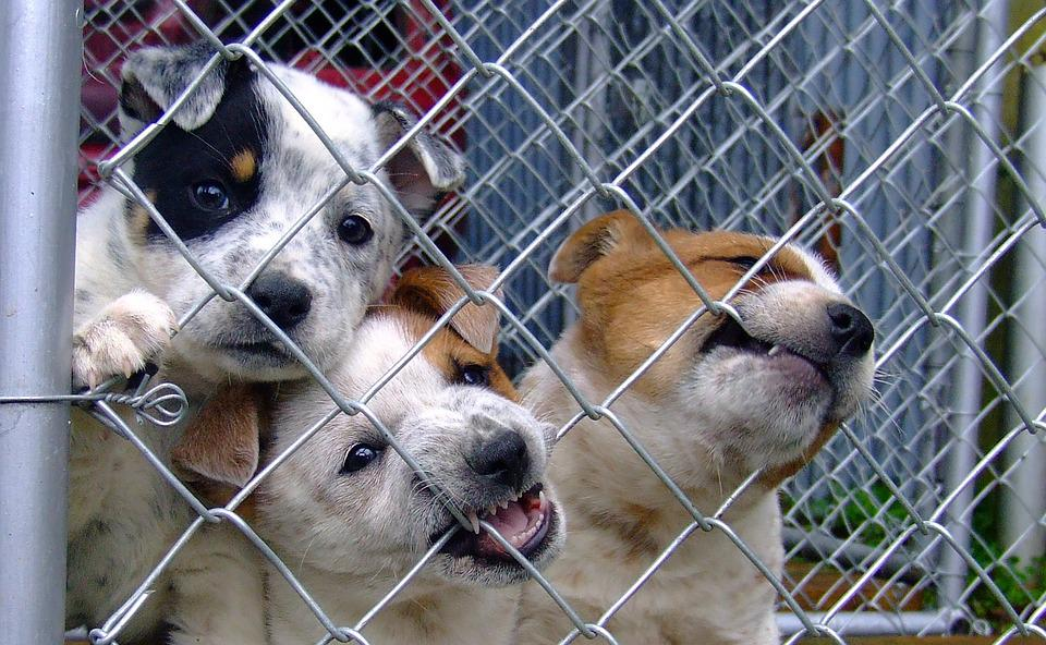 Karanténa je ten správny čas na adoptovanie a výcvik psíka