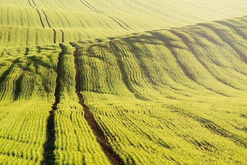 Field, Grain, Wavy, The Low Sun