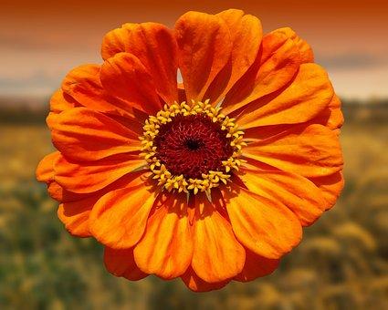 Flores Anaranjadas Imagenes Pixabay Descarga Imagenes Gratis
