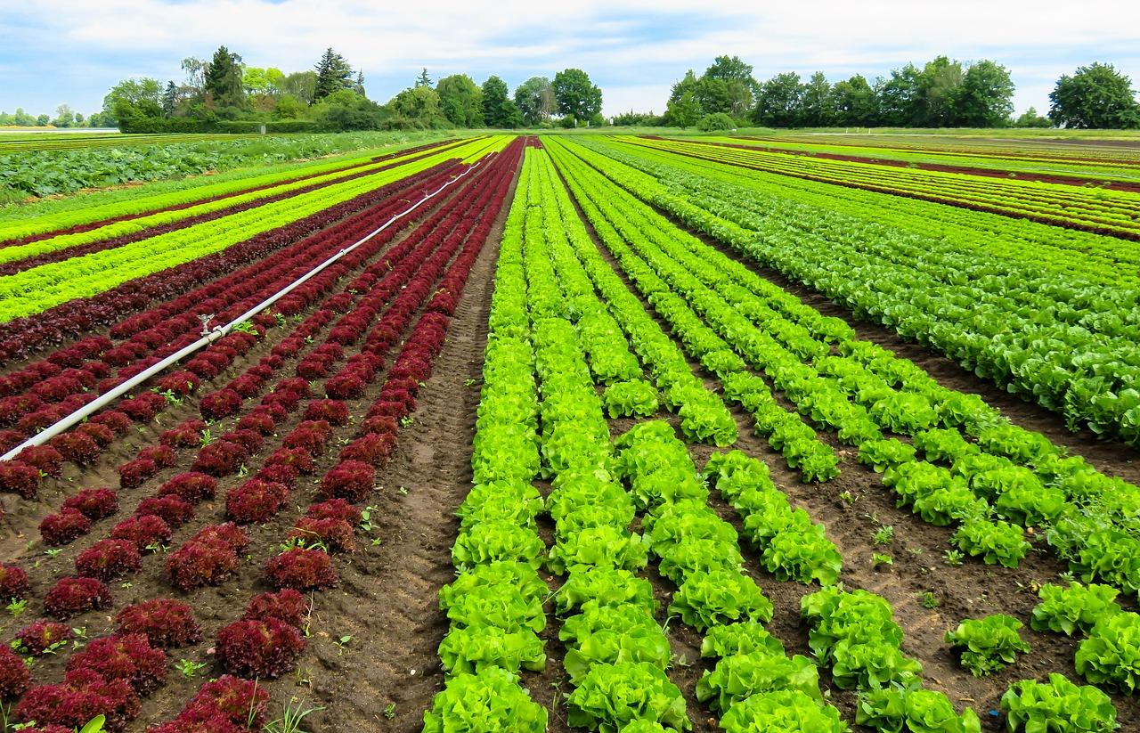 """agricultura [economía] """"el tema del envejecimiento de la población es muy importante, al final del día las tasas de interés se mueven mucho en la perspectiva de largo plazo respecto a cuál es la decisión de ahorro y consumo de los hogares."""