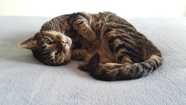 čierna Dominikánska mačička HD príťažlivé Lezbické sex
