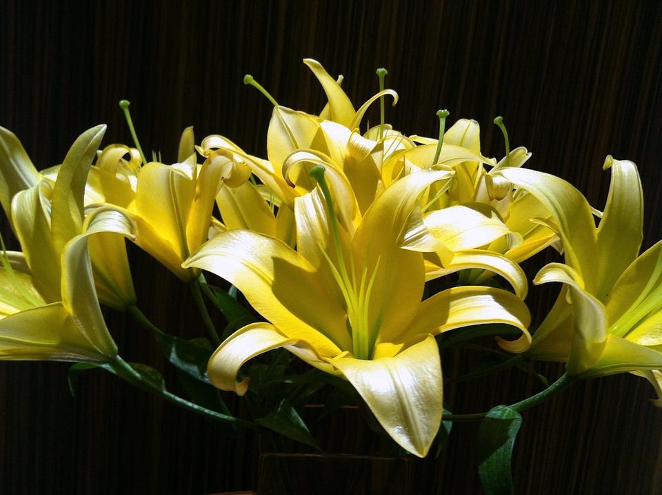photo gratuite lys blanc sombre fleur plantes image gratuite sur pixabay 1443388. Black Bedroom Furniture Sets. Home Design Ideas