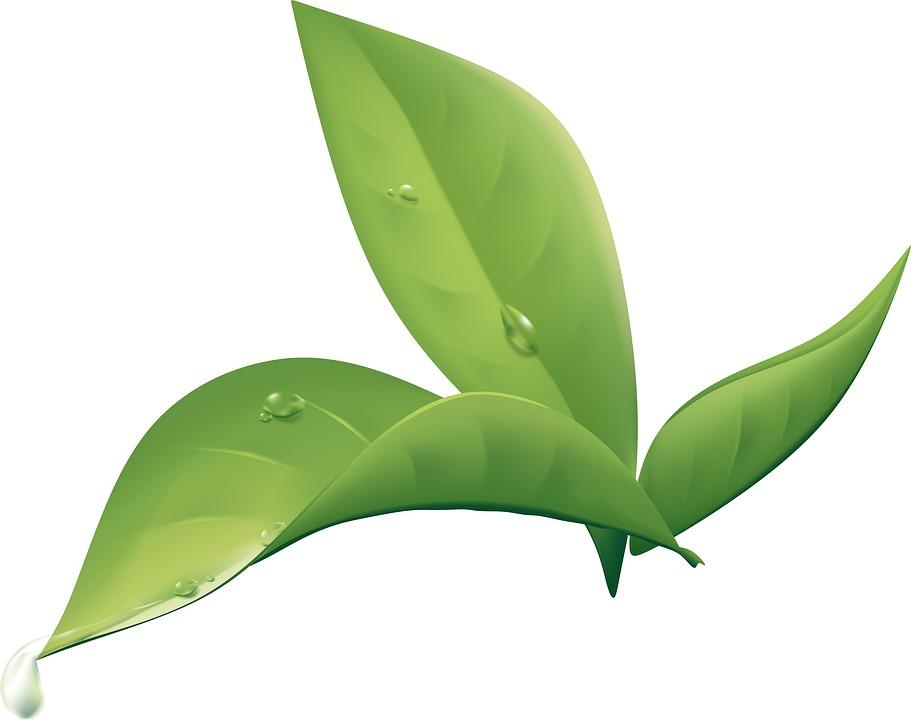 free illustration plant  leaf  wet  nature  green free vector leaflet vector leaf springs