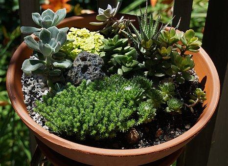 Succulent Garden, Succulent, Garden