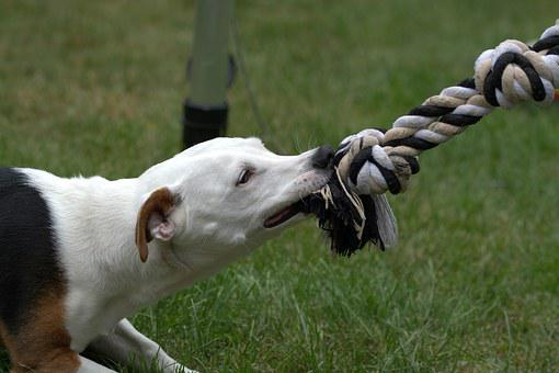 How To Stop A Dog From Chewing?