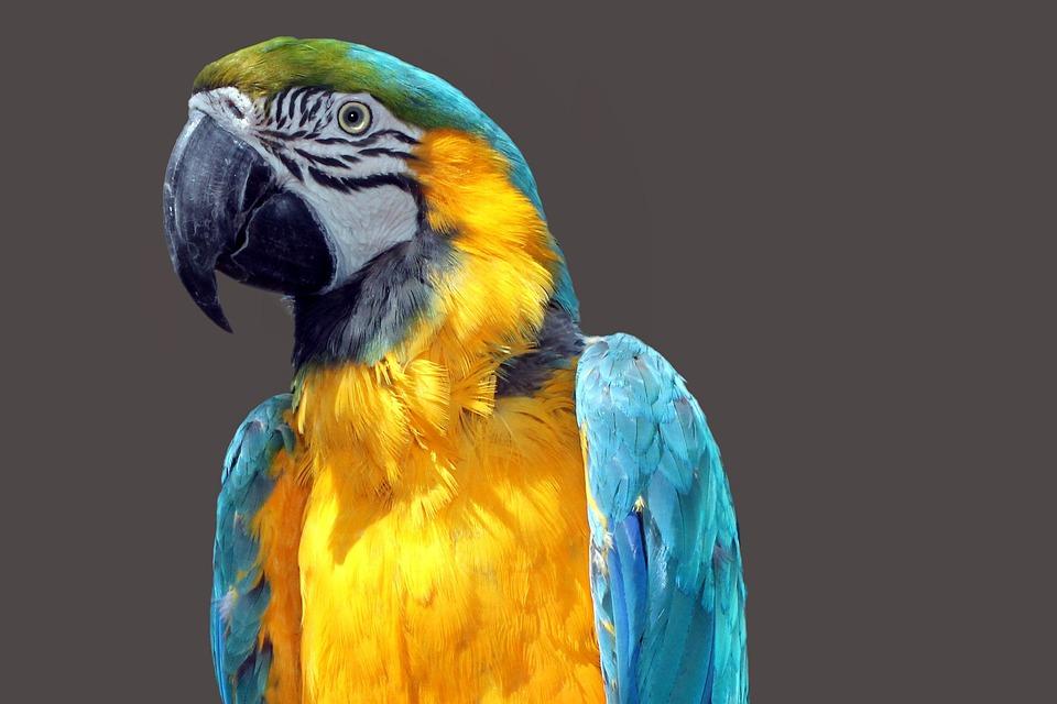 オウム アラ 鳥 · Pixabayの無料...