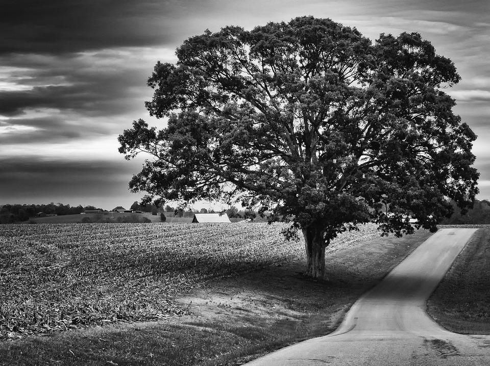 Free Photo Monochrome Black And White Free Image On