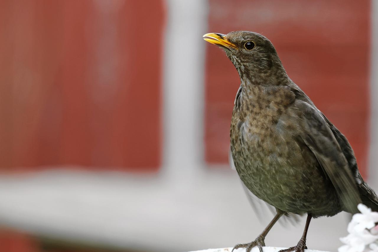 Что за птицы появились в москве фото