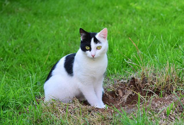 Free Photo Cat Young Cat Domestic Cat Pet Free Image