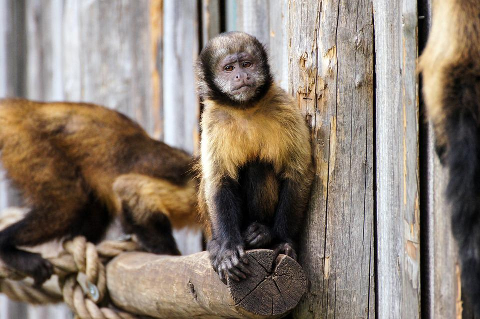 Monkey, Zoo, Sad, Animal, Animal World