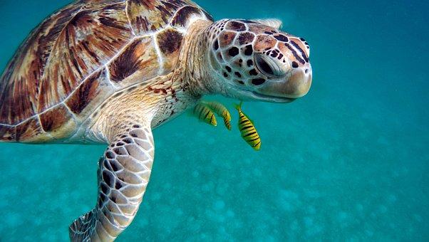 Water Sea Diving Underwater Ocean Sub Imme