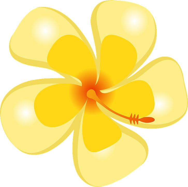 Free vector graphic: Hibiscus, Tropical, Flower, Hawaii - Free Image ...