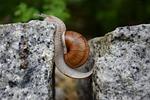 snail, will